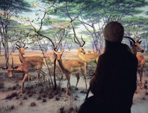 Liselot van der Heijden, Natural History XIII, 2007.